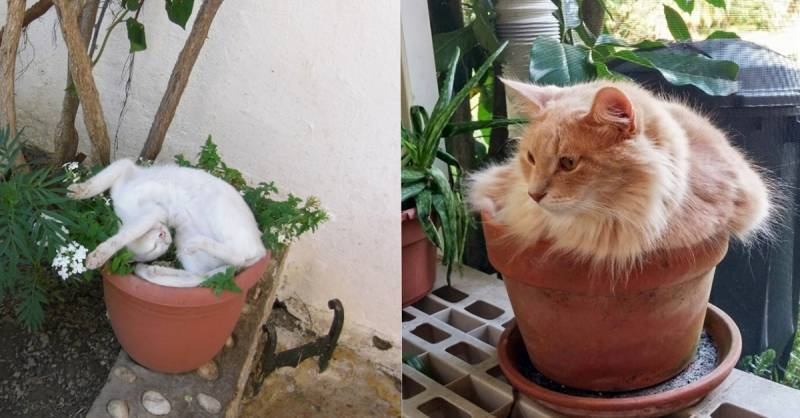 Почему кошка ест землю из цветочного горшка?