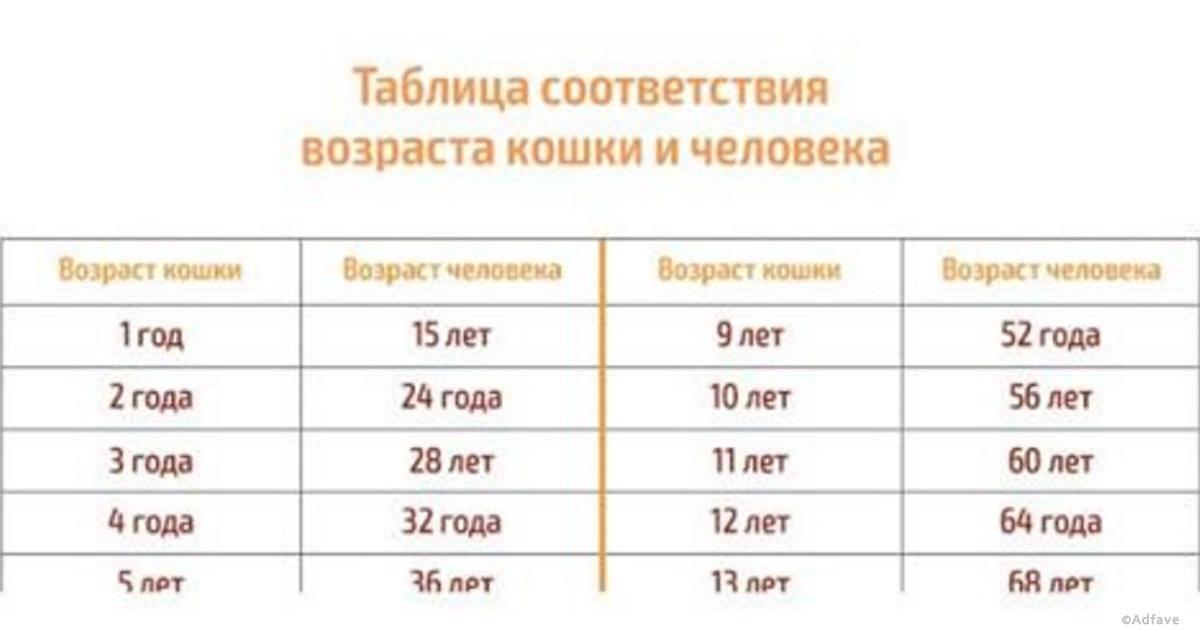 Как определить возраст кошки, соотношение возраста кошки и человека, таблица возраста кошек, определение возраста по зубам | кошки - кто они?