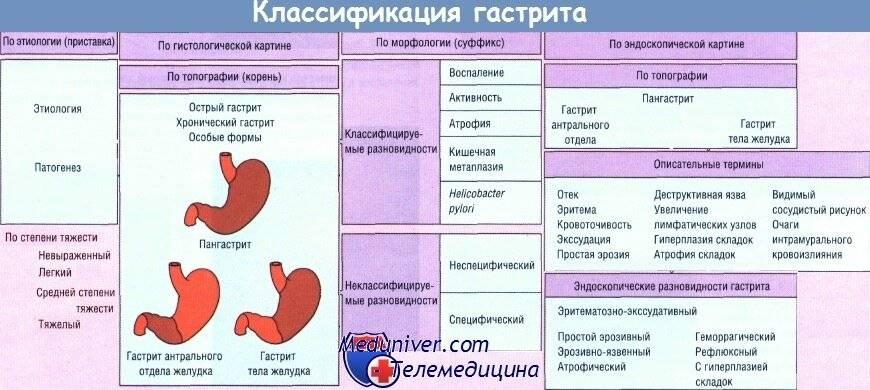 Лимфома кишечника у кошек: симптомы, лечение и прогнозы