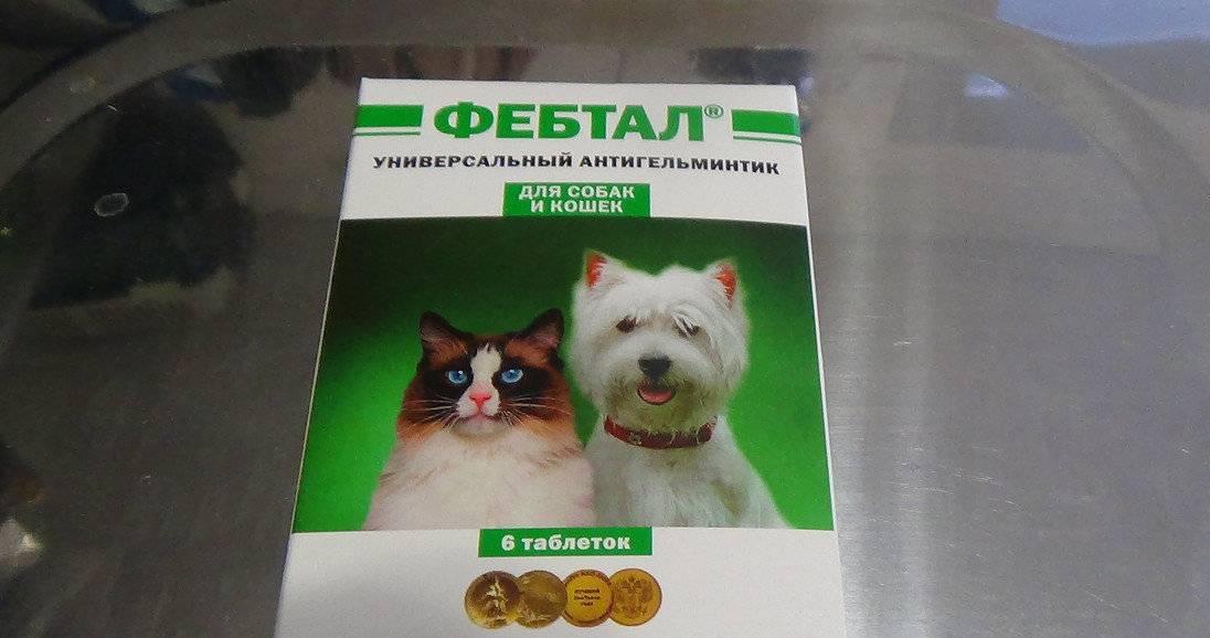 Тронцил-к для кошек: показания и инструкция по применению, отзывы, цена