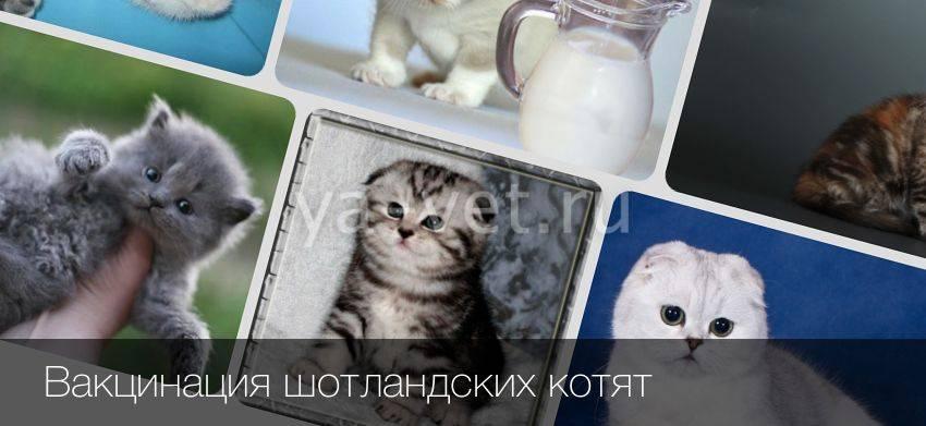 Прививки кошкам и котятам: график, вакцины, сроки и основные правила