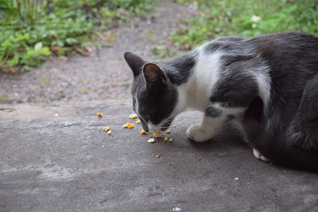 Кошка отравилась крысиным ядом симптомы лечение