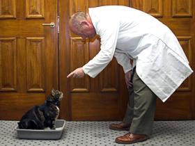 Какие крупы можно давать кошкам: вся польза и вред злаковых