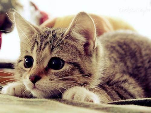 Самые прикольные клички для котов