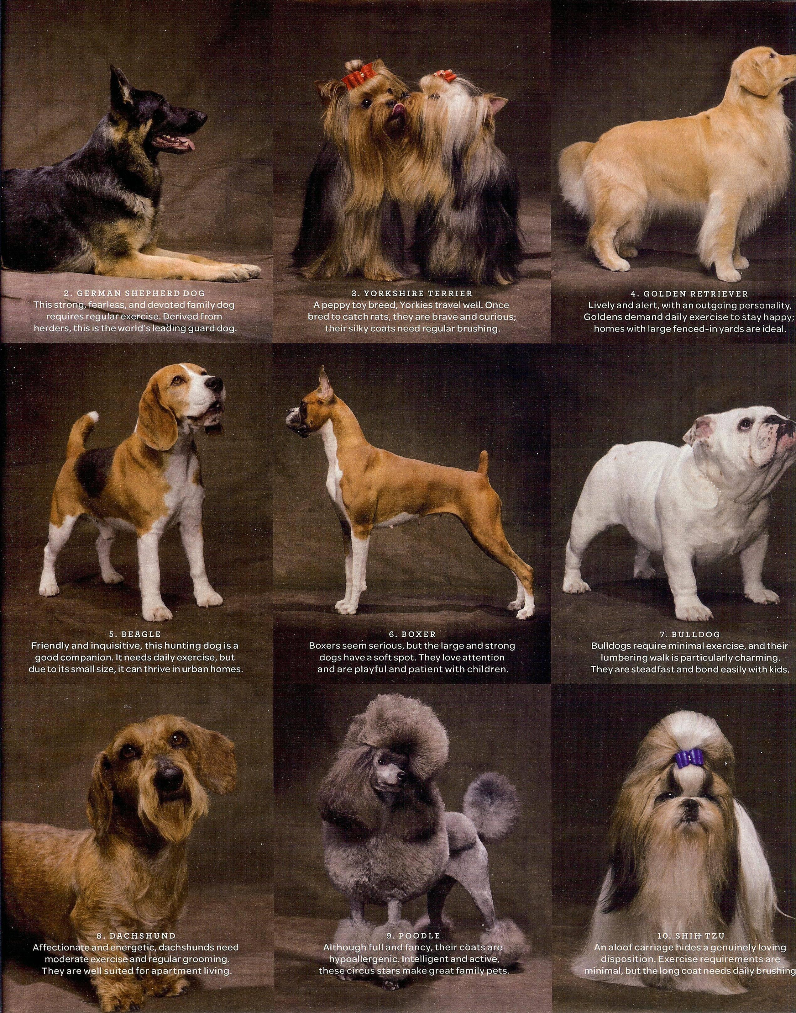 Топ-10 средних пород собак: характеристика, описание, особенности