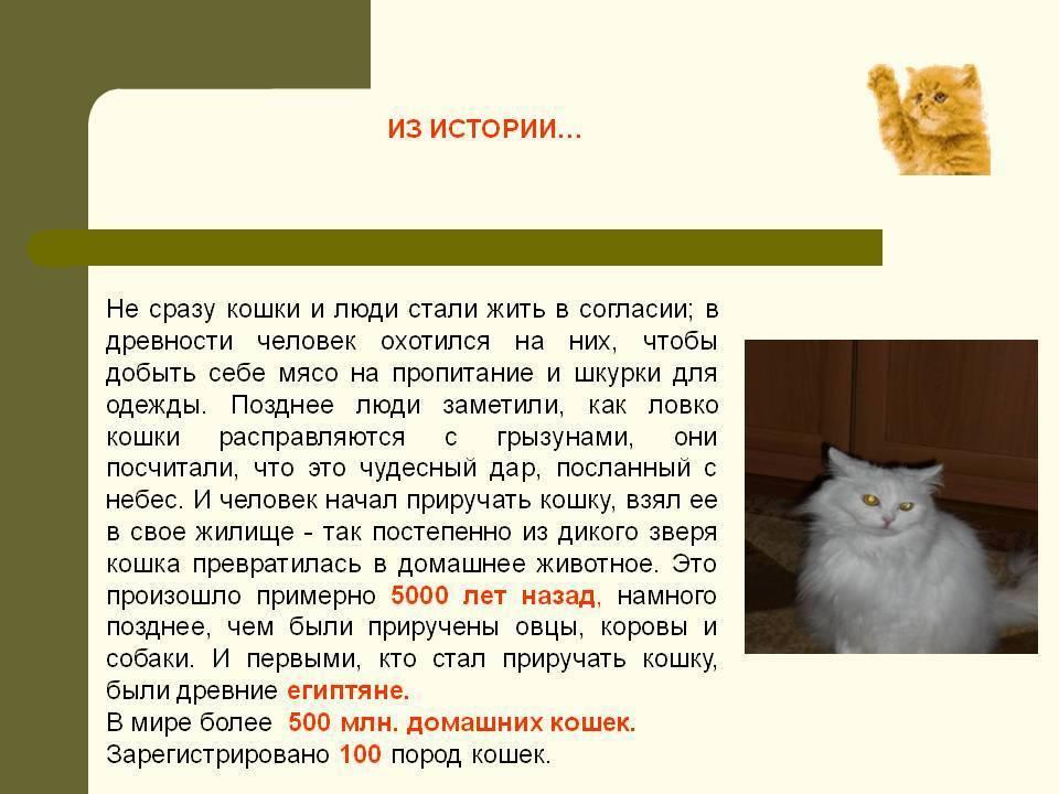 Зачем люди приручили кошку