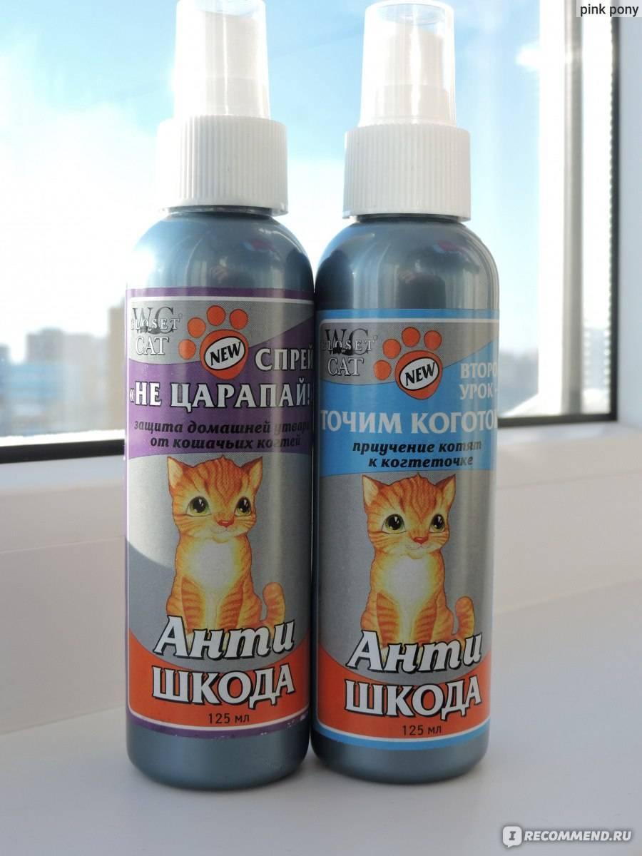 Запахи, которые отталкивают кошек — способ воспитания питомцев