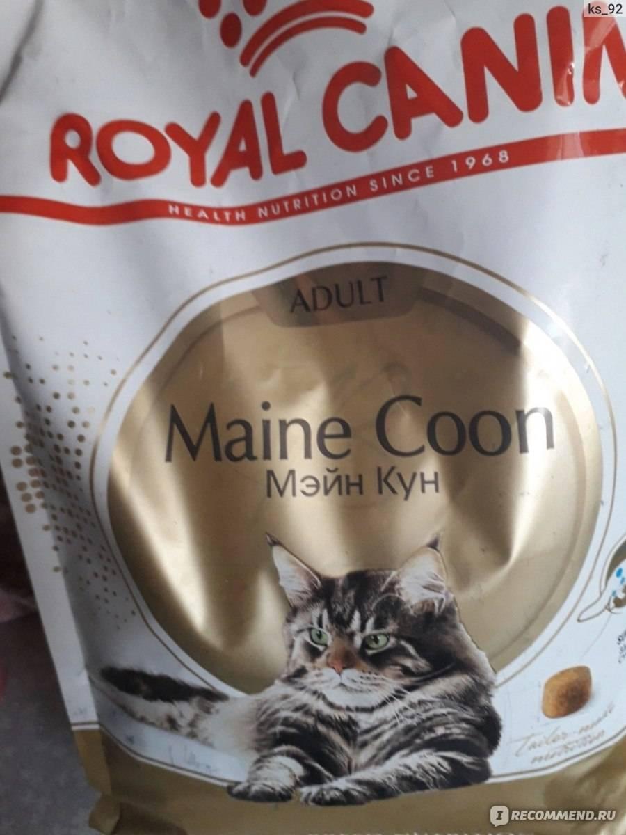 Чем кормить котенка мейн-куна — меню по возрастам