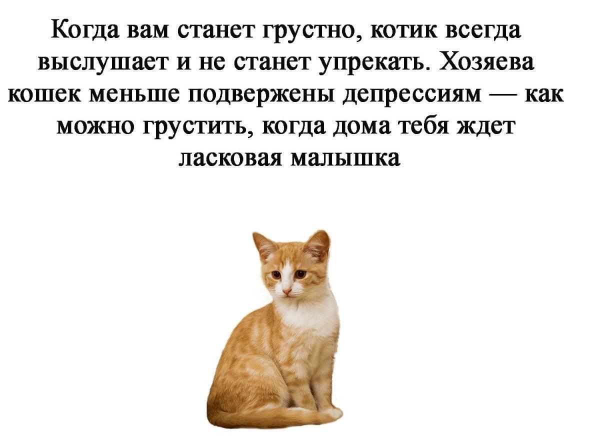Стоит ли заводить кота в квартире стоит ли заводить кота в квартире