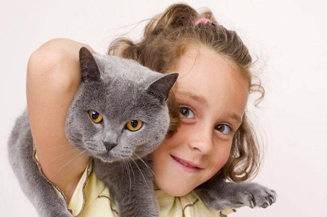 Кошки, не вызывающие аллергию: выбираем питомца для аллергика