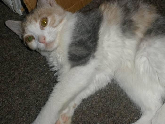 Рахит у котят, симптомы и лечение, причины и предрасполагающие факторы