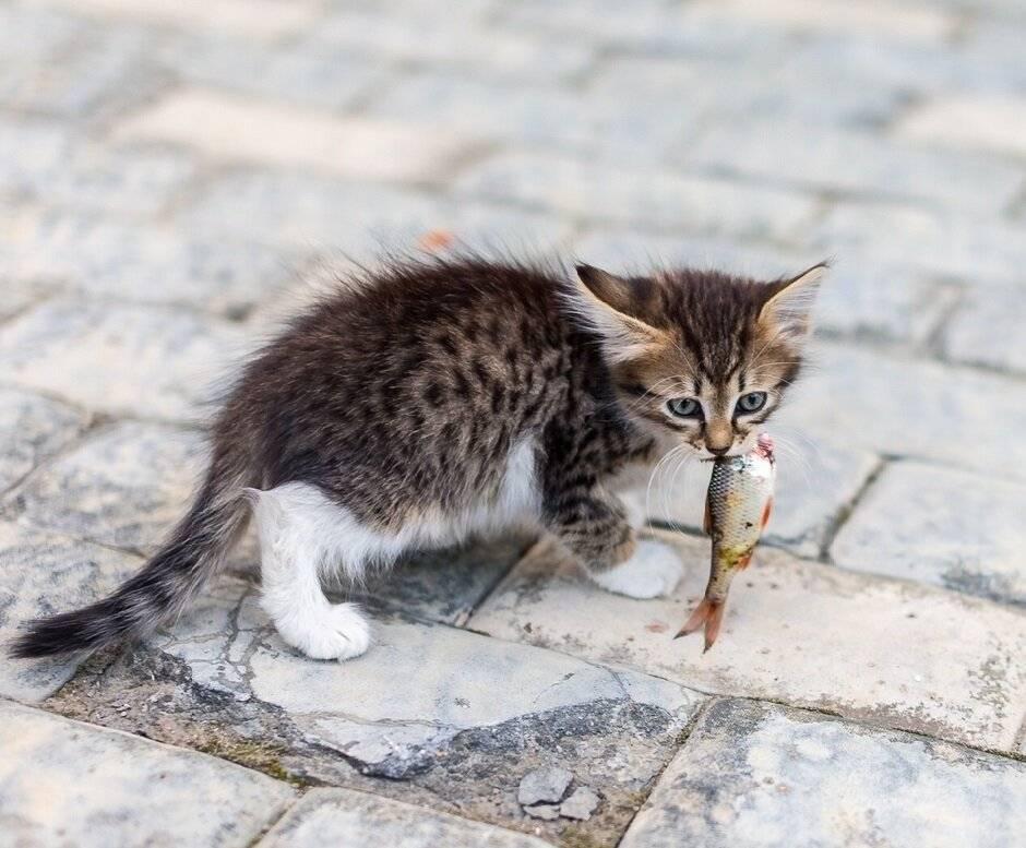 Почему кошка переносит котят в другое место: что делать