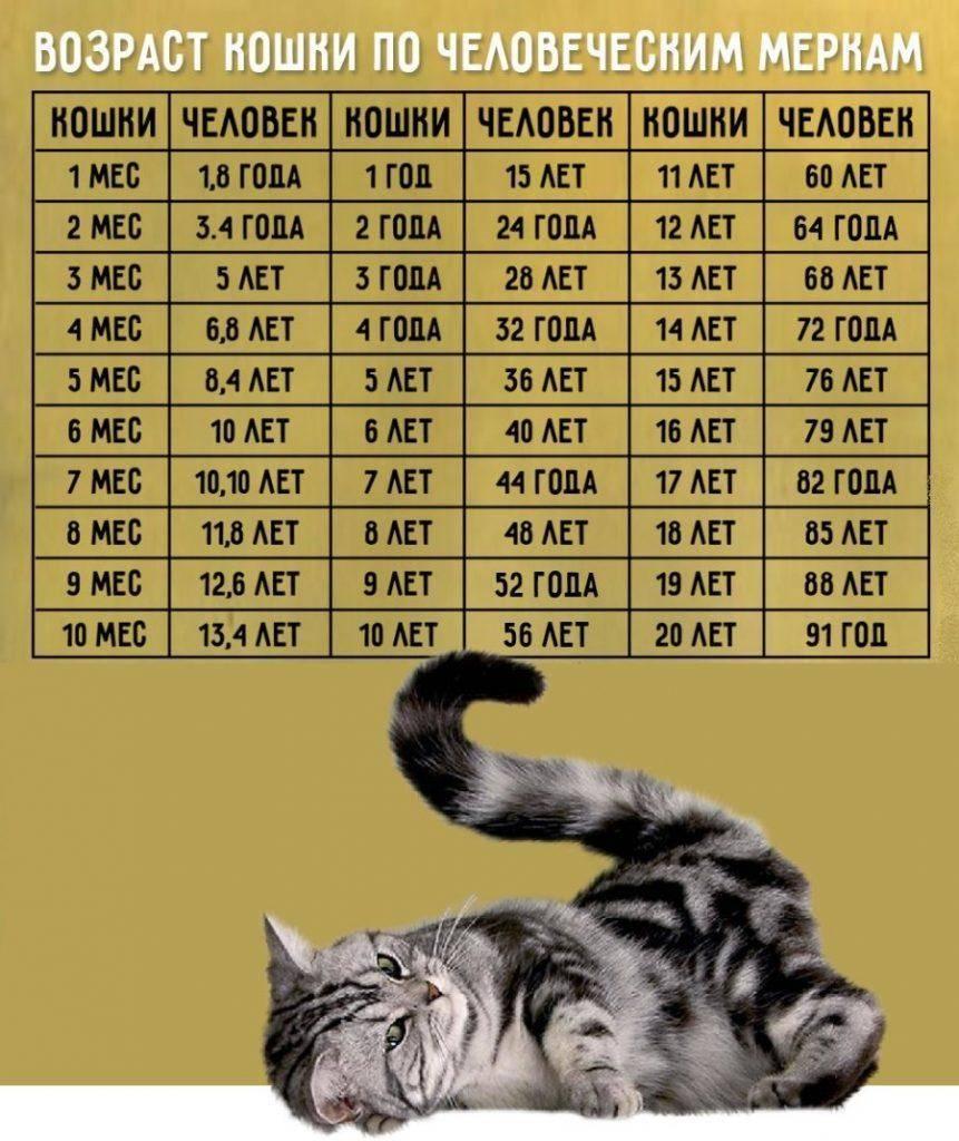 Котик мой ровесник или как узнать кошачьи годы по человеческим меркам