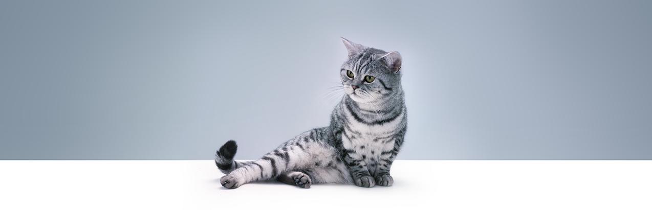 Как ухаживать за кошкой и потомством после родов