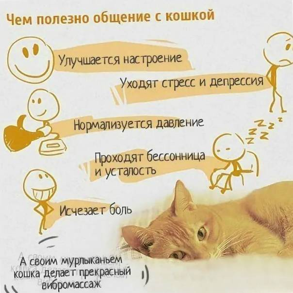 Кошка в доме: польза и вред, правила содержания