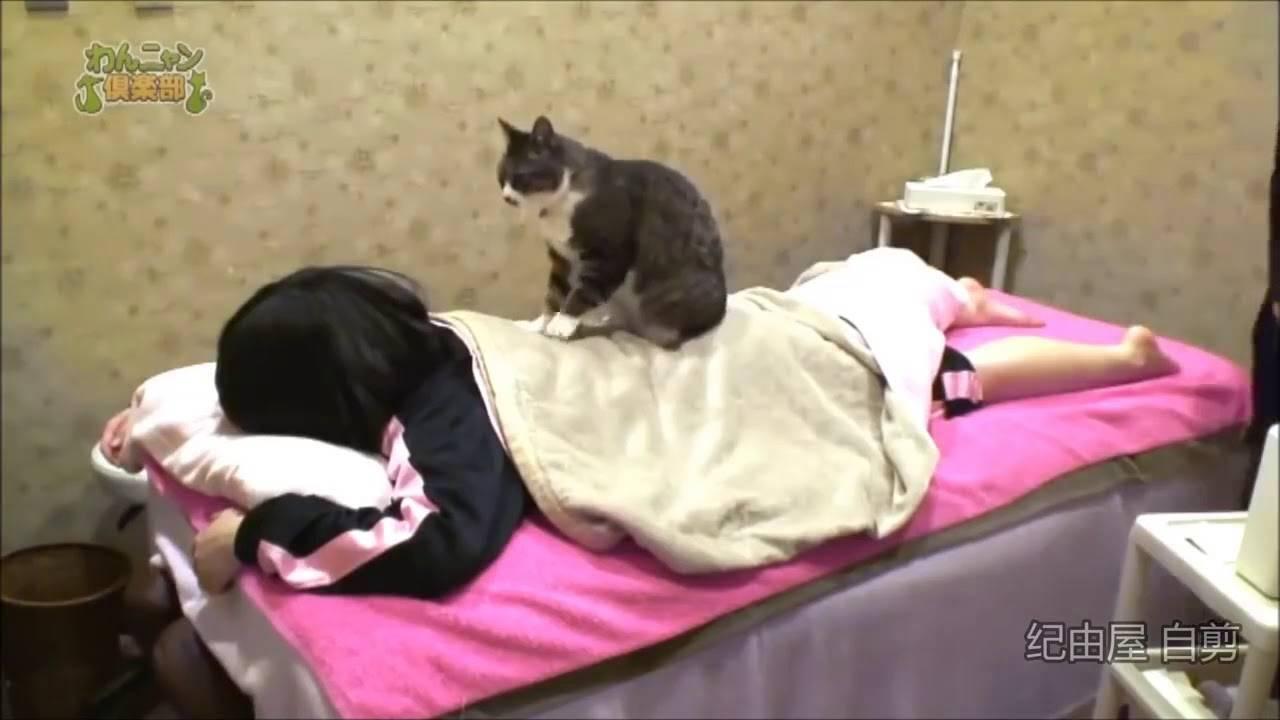 Массаж кот делает: причины, какой эффект, как остановить