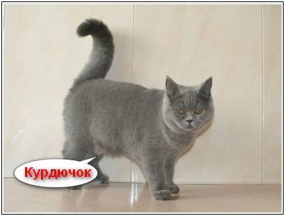 У кота внизу живота мягкий мешочек