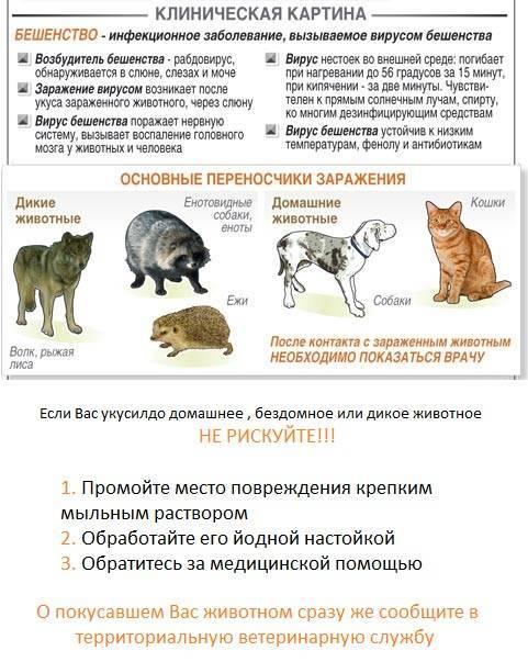 Вирусный перитонит у кошек – симптомы, лечение, сколько живут больные животные