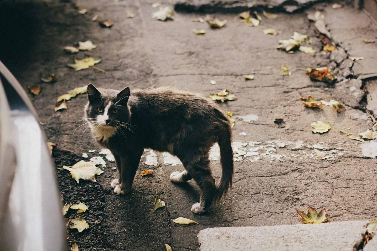 Что надо сделать в первую очередь с котенком, которого подобрали на улице: главные действия нового владельца