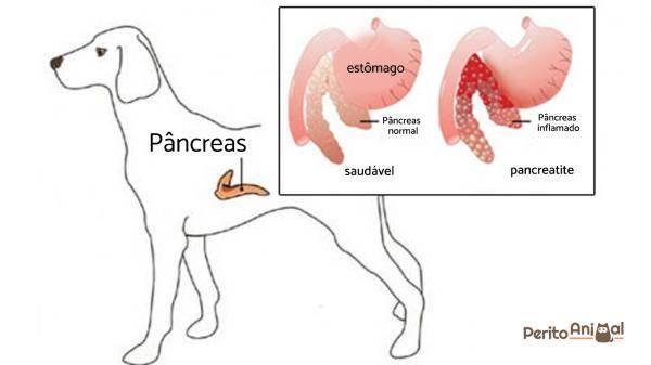 Панкреатит у кошек: первые симптомы, нюансы питания и варианты лечения (125 фото и видео)