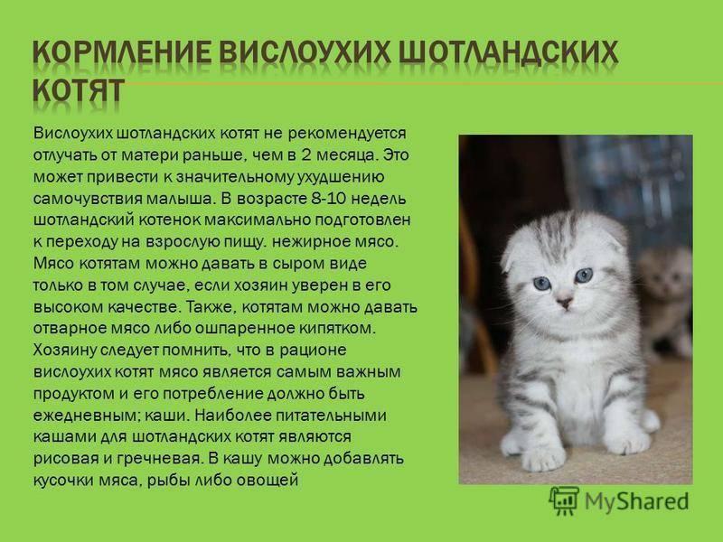 Чем кормить котенка в 1 месяц без кошки