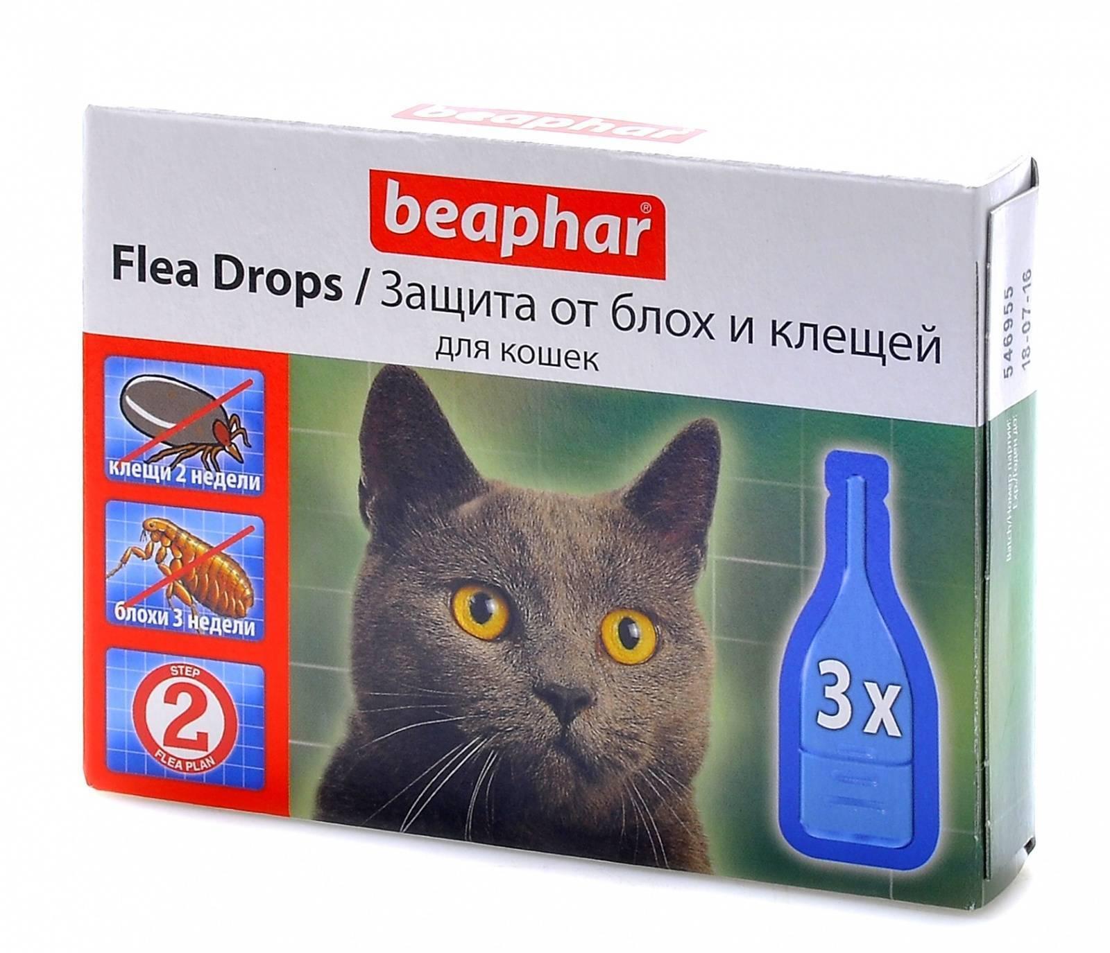Обзор средств от блох у кошек
