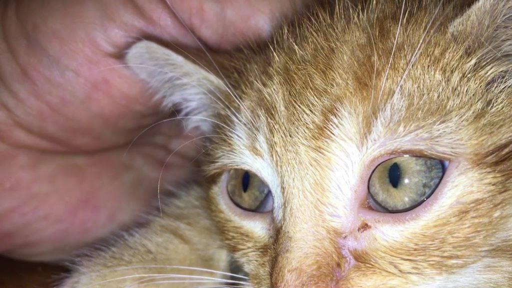Симптомы и лечение сальмонеллеза у кошек. сальмонеллез у кошек и котов