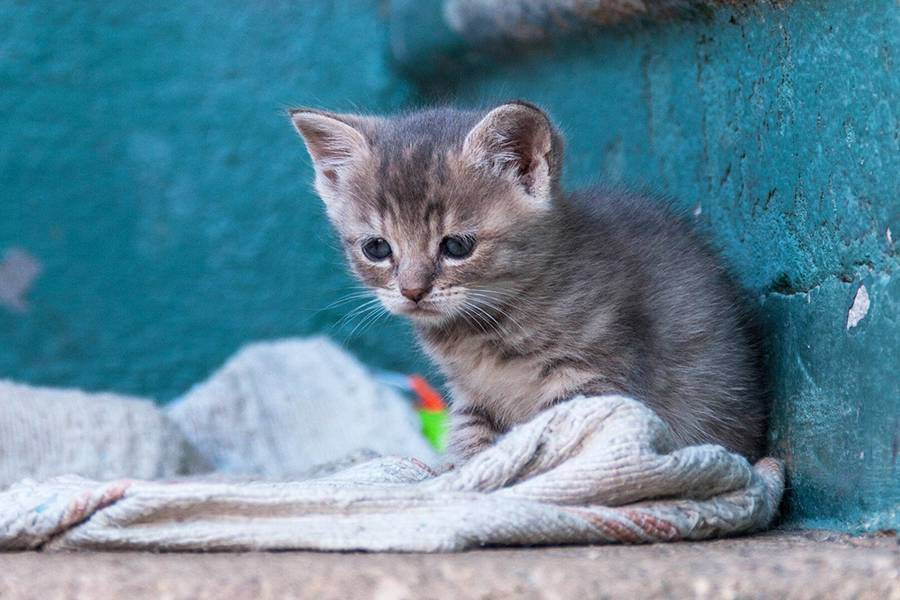Особенности содержания кошки зимой - всё о кошках и котах