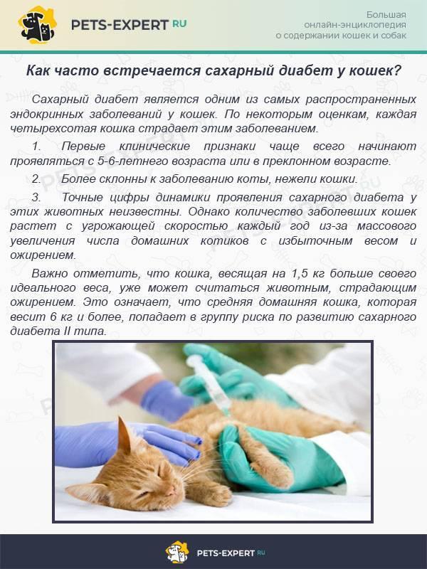 Сахарный диабет у кошек и котов: симптомы, лечение и причины