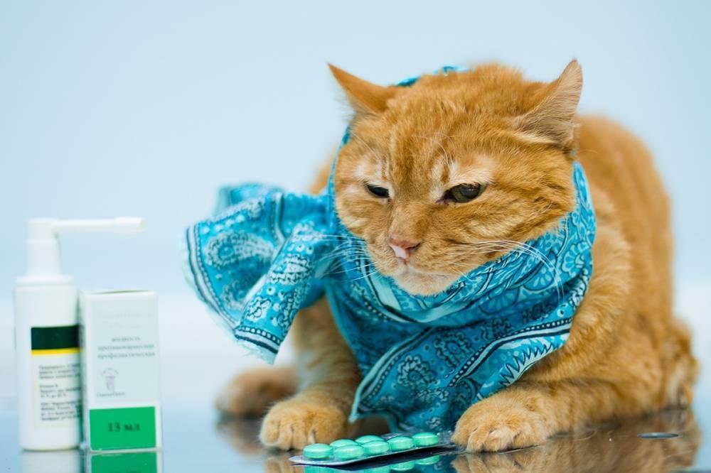 Кот чихает и у него текут сопли, он сопит носом – что делать, чем лечить в домашних условиях?
