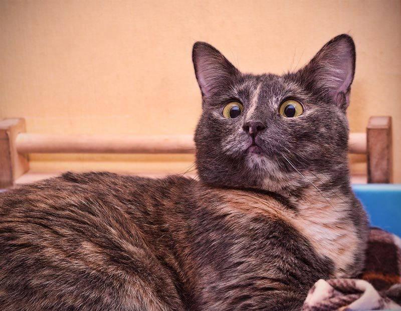Кот с косыми глазами