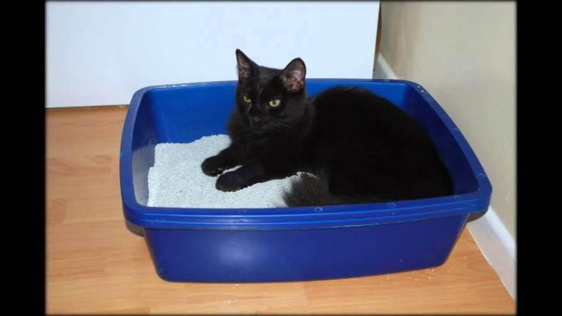 Как отучить котенка гадить в неположенном месте? как сохранить дом в чистоте, если вы завели котенка