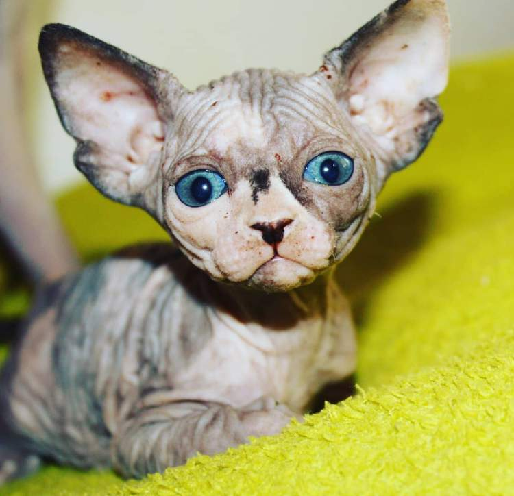 Какая средняч температура тела у кошек — книга о собаках