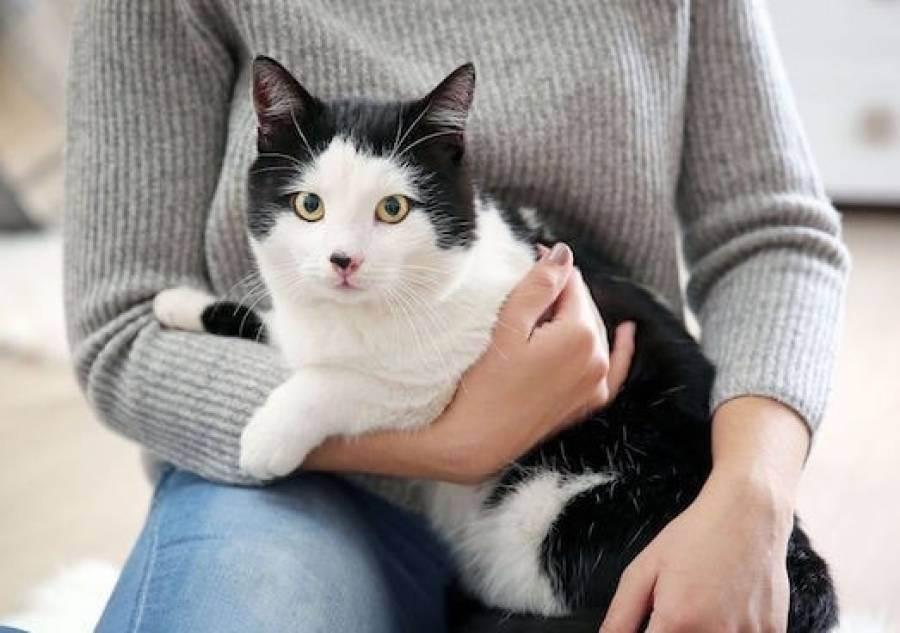 Перхоть у кошки причины лечение профилактика