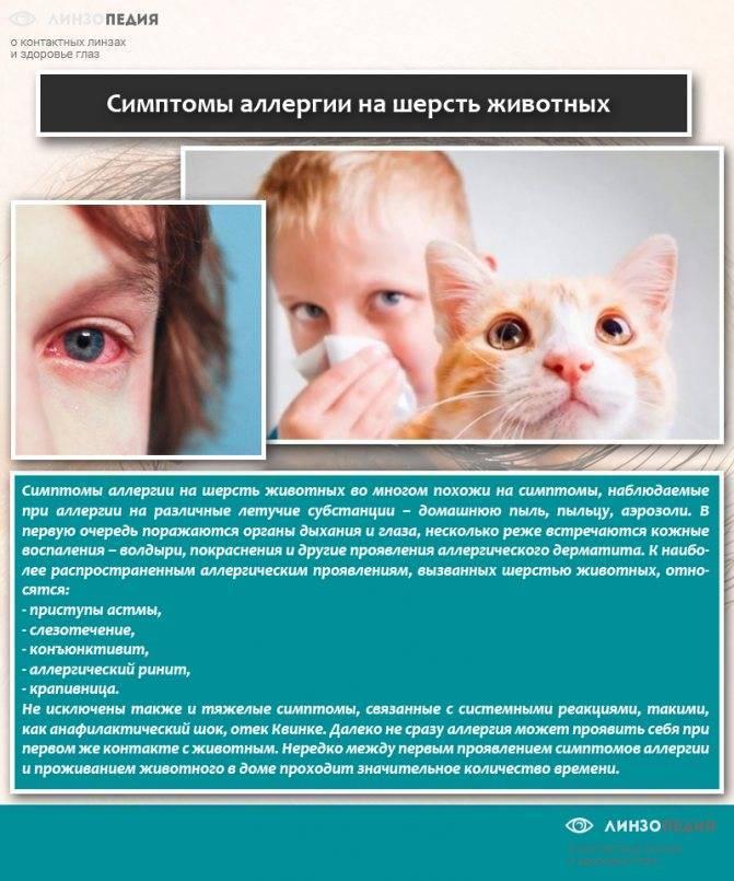 Как проявляется у грудничков аллергия на кошек - ваш домашний доктор