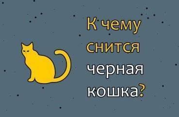 Сонник - кошка, как толковать такие сновидения?