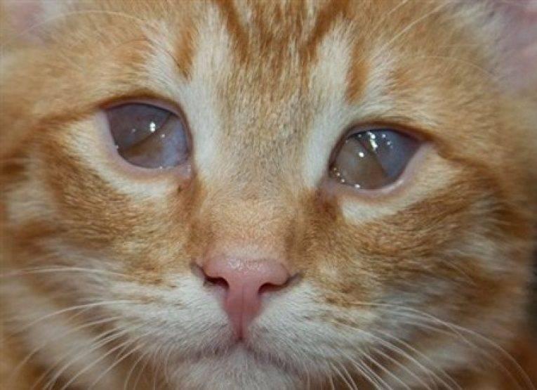 Шпиц щурит один глаз: что делать, если он не полностью открывается, резко закрылся или покраснел? причины у взрослых животных и щенков