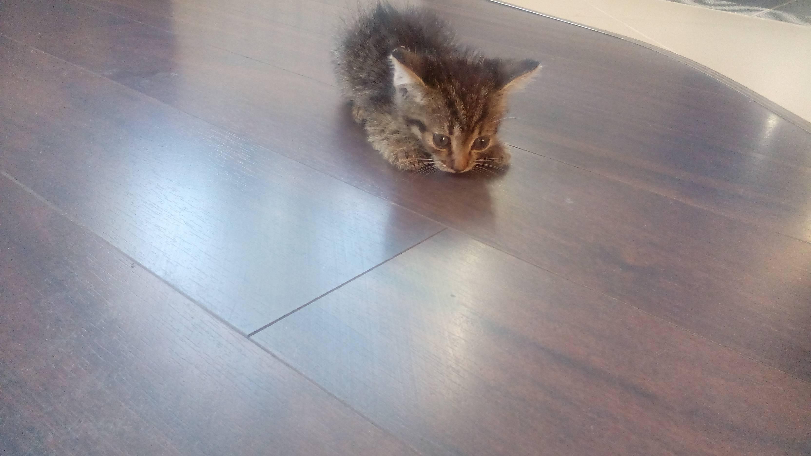 Судороги у кошки причины и лечение - муркин дом