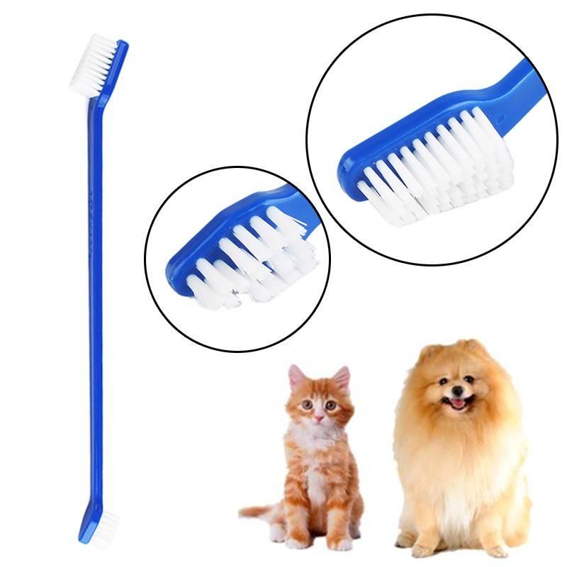 Как чистить зубы кошке: 110 фото и видео инструкция эффективной очистки зубов