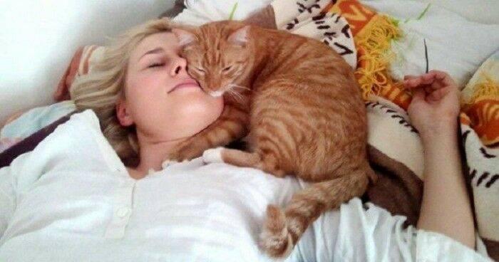Можно ли спать с котом в одной постели?