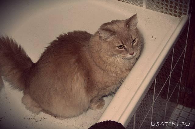 Что делать, если у кошки понос с кровью?
