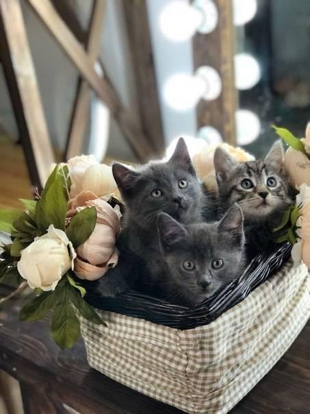 Самая ласковая порода кошек: примеры ручных и добрых представителей