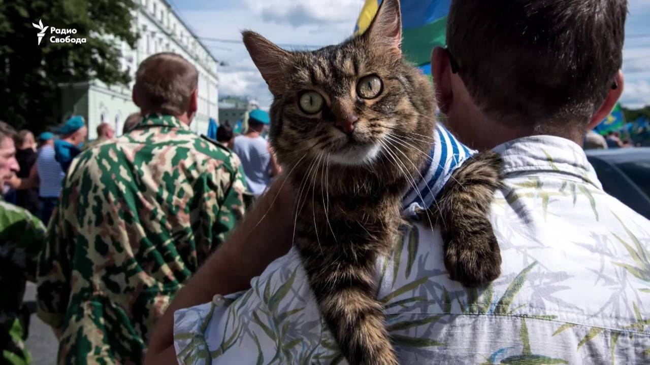 Происхождение кошек. древние и современные кошки