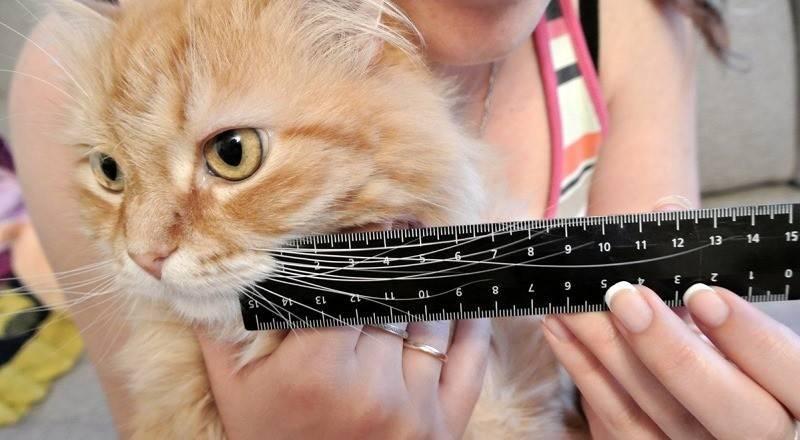 Для чего коту усы