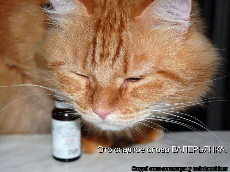 Почему коты любят валерьянку: воздействие на котов, кошек и котят