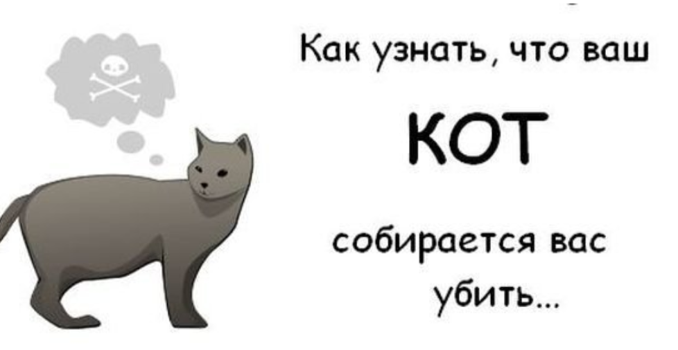 Как помыть кота