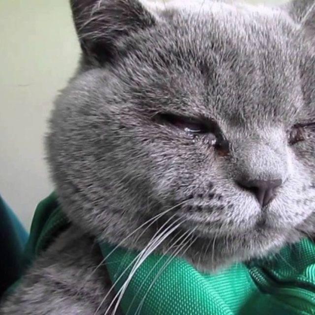 Чем опасны выделения из глаз у котёнка. коричневые выделения из глаз у кошки: причины, лечение, профилактика