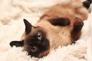 Как назвать кошку: лучшие варианты и список по алфавиту