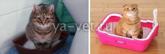 Понос у кота: чем лечить в домашних условиях. основные причины поноса, что делать в первую очередь