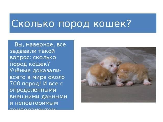 Кошки и дети: лучшие породы для ребенка в квартире